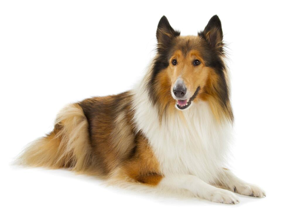 Dog Breeds That Are Small And Quiet