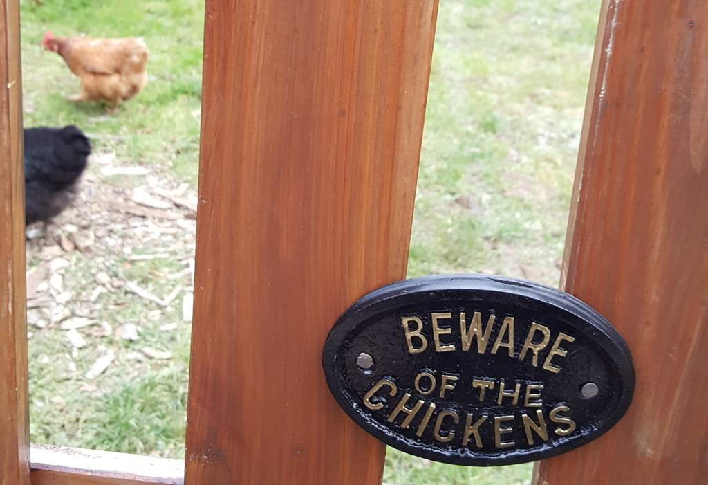 Plaque Beware Of The Chickens Chicken Keeping Accessories