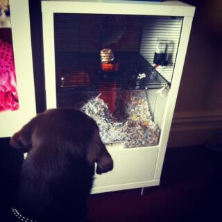 This is my dog and my gerbil seeing each other through the qute :)