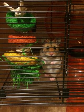Albert looking impressed with his cage
