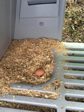 Our first egg :)