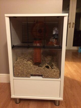 Our 2 gerbils love it