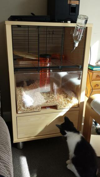 My kitten Matilda and my hamster Tedder :)