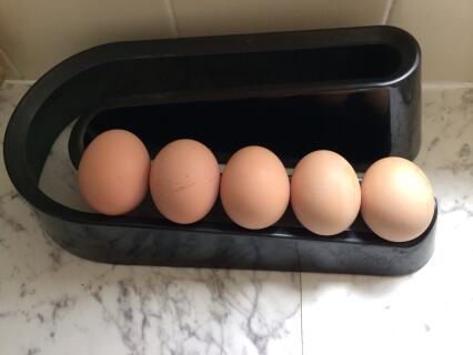 1st ever eggs laid