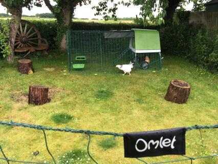 New chickens enjoying Omlet Go Up