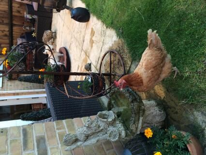 Sadie drinking from the fountain