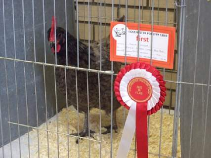 Andalusian hen first prize