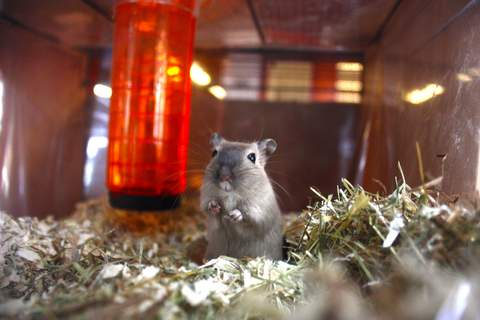 Little peek in the world of Tin the Gerbil