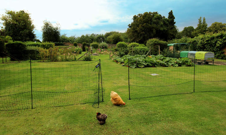 Keep hens out of your prized veggie patch