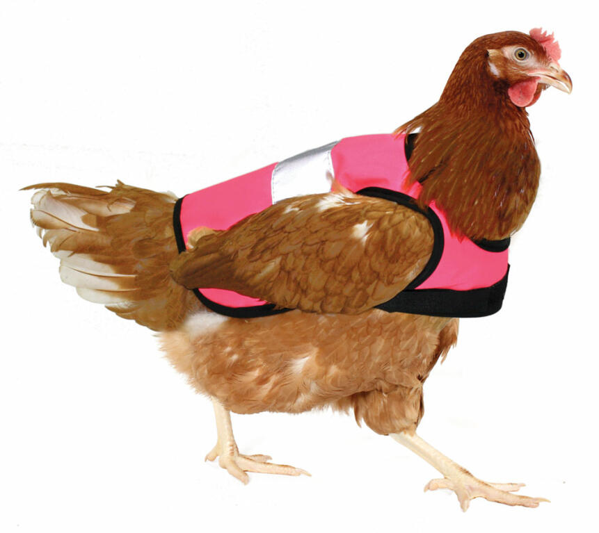 High-Vis Chicken Jacket in pink