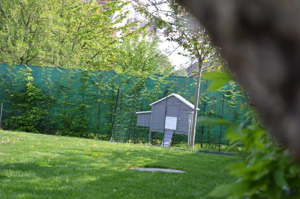 chicken fencing in Alsace (2)