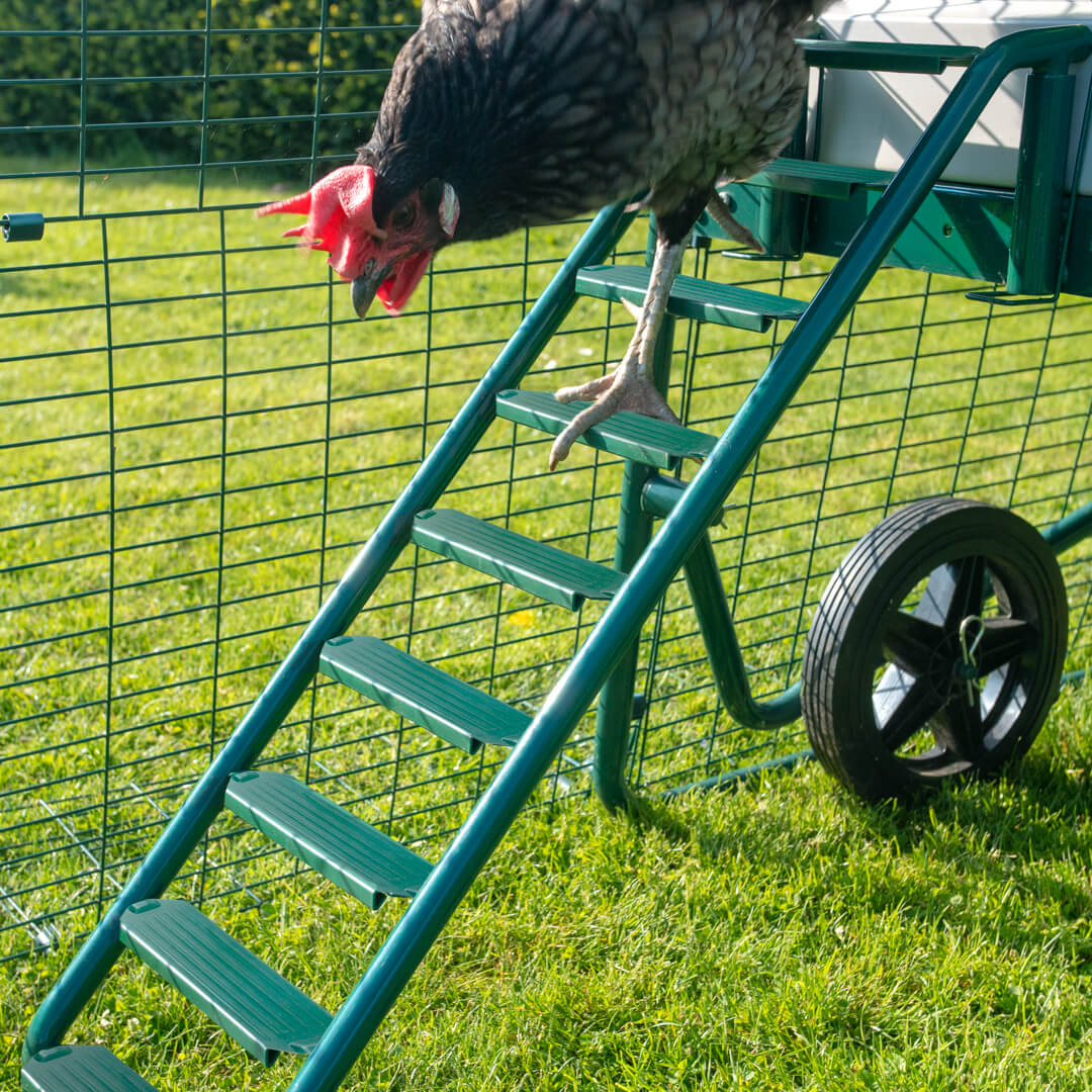 Ladder Grips Eglu Cube Eglu Spares Accessories Chicken Coops Walk In Chicken Runs Chicken Fencing And More Omlet