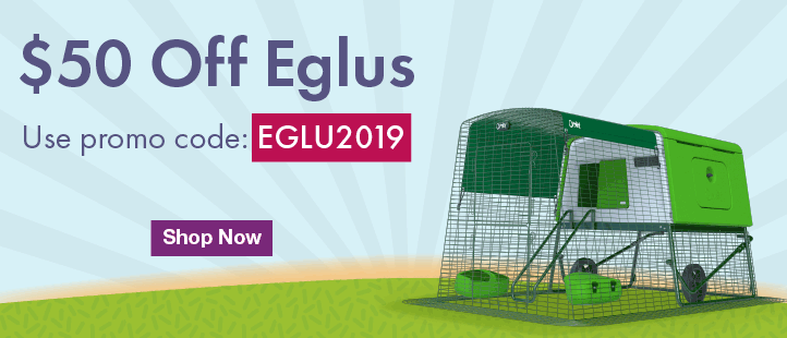 January Eglu Offer