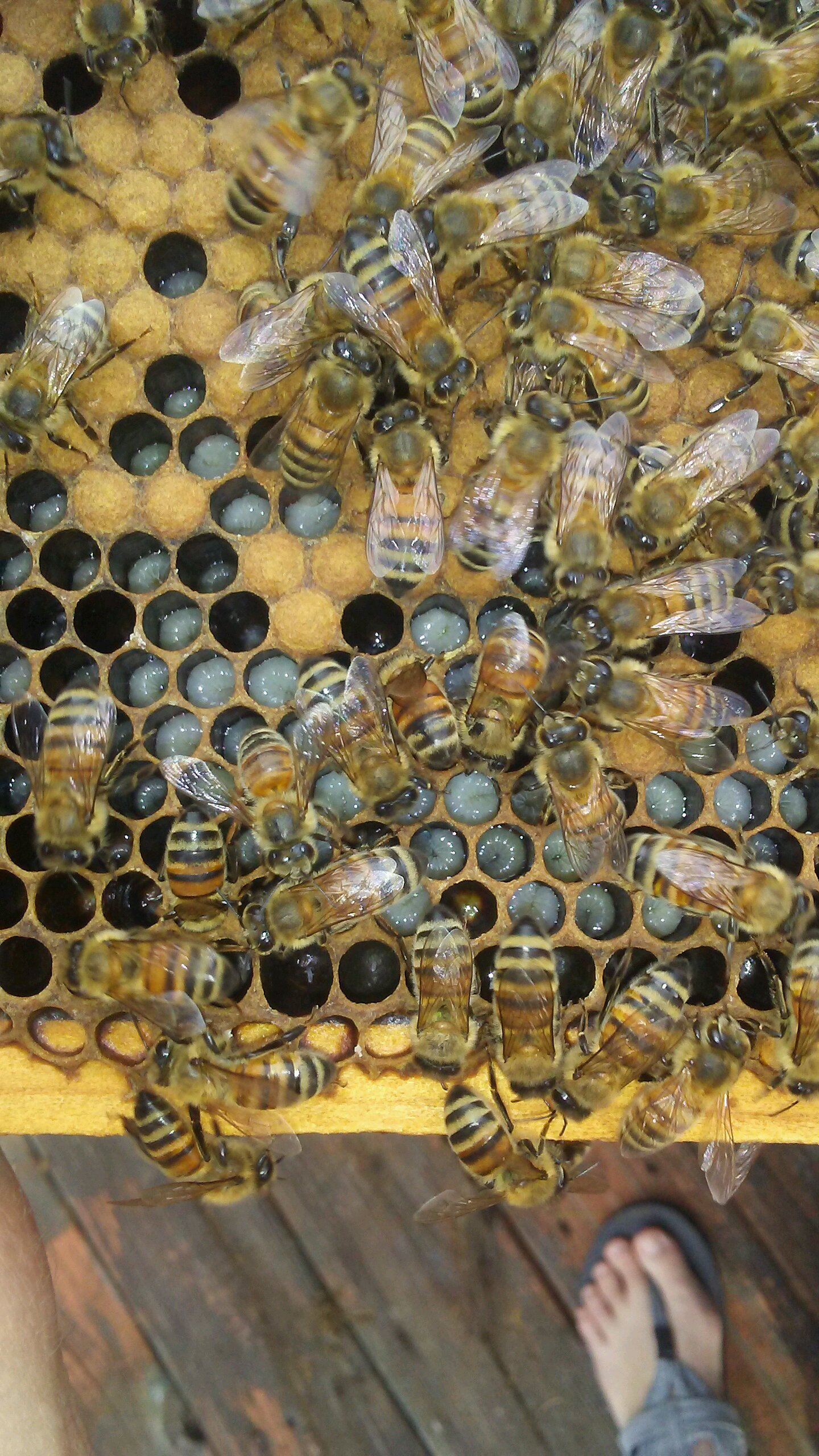 How to read the frames | Beekeeping | Bees | Guide | Omlet US