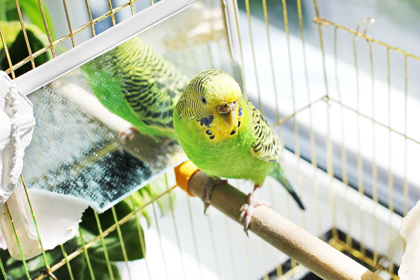 parakeet cages