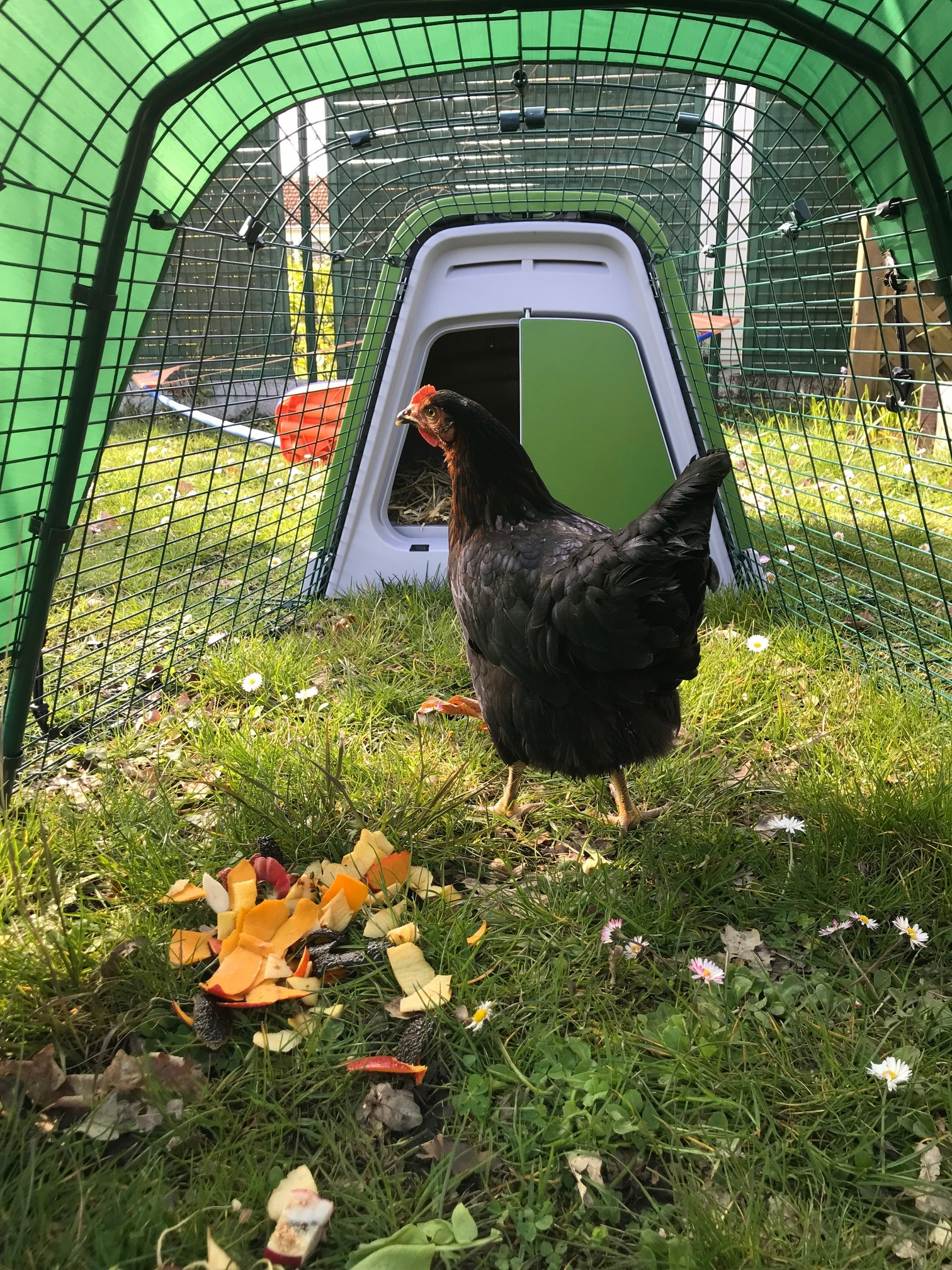 Eglu go chicken coop chicken coops and pet chicken for Installer un poulailler dans son jardin