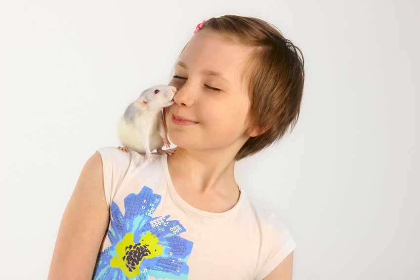 Hamsters are affectionate