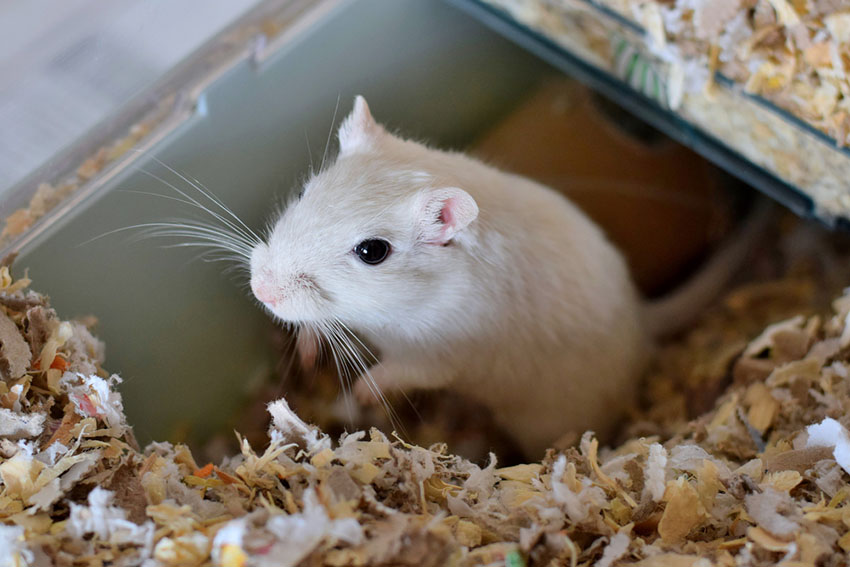 gerbil food