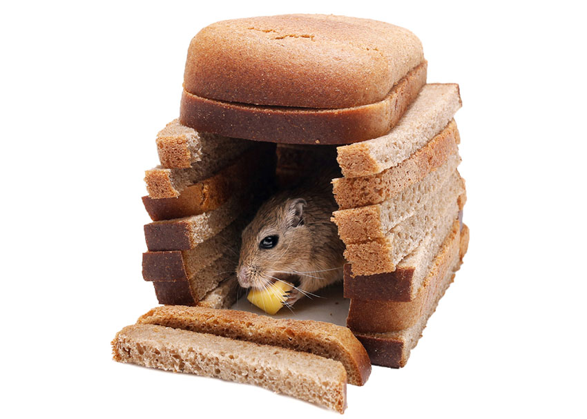 hamster needs