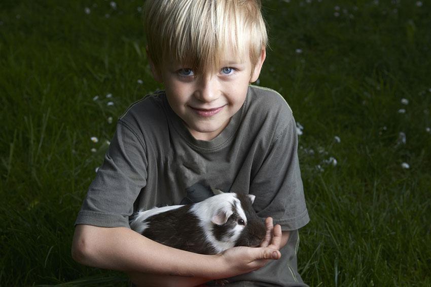 Handling a Guinea pig