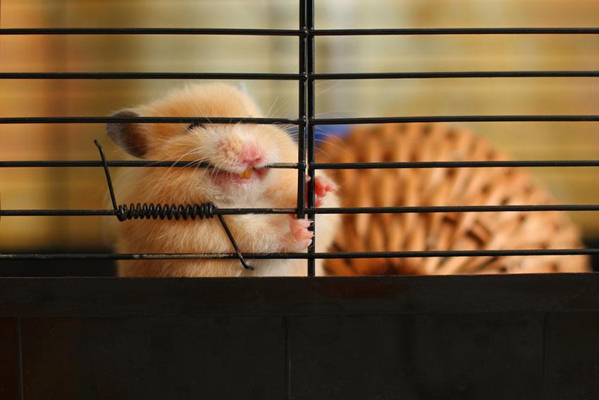 Hamster Common Illnesses | Hamster Illnesses | Hamsters | Guide