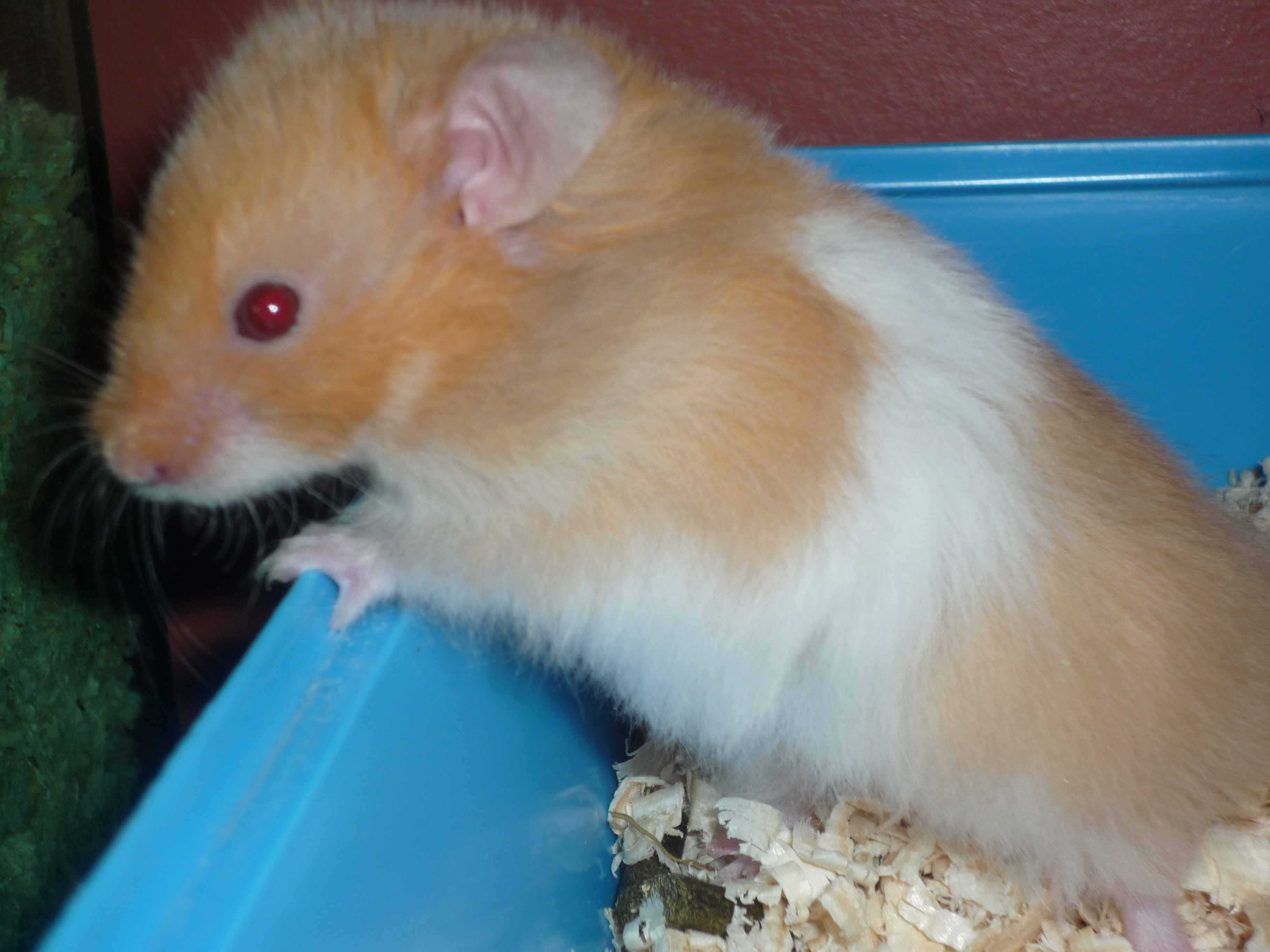 History | About Hamsters | Hamsters | Guide | Omlet US