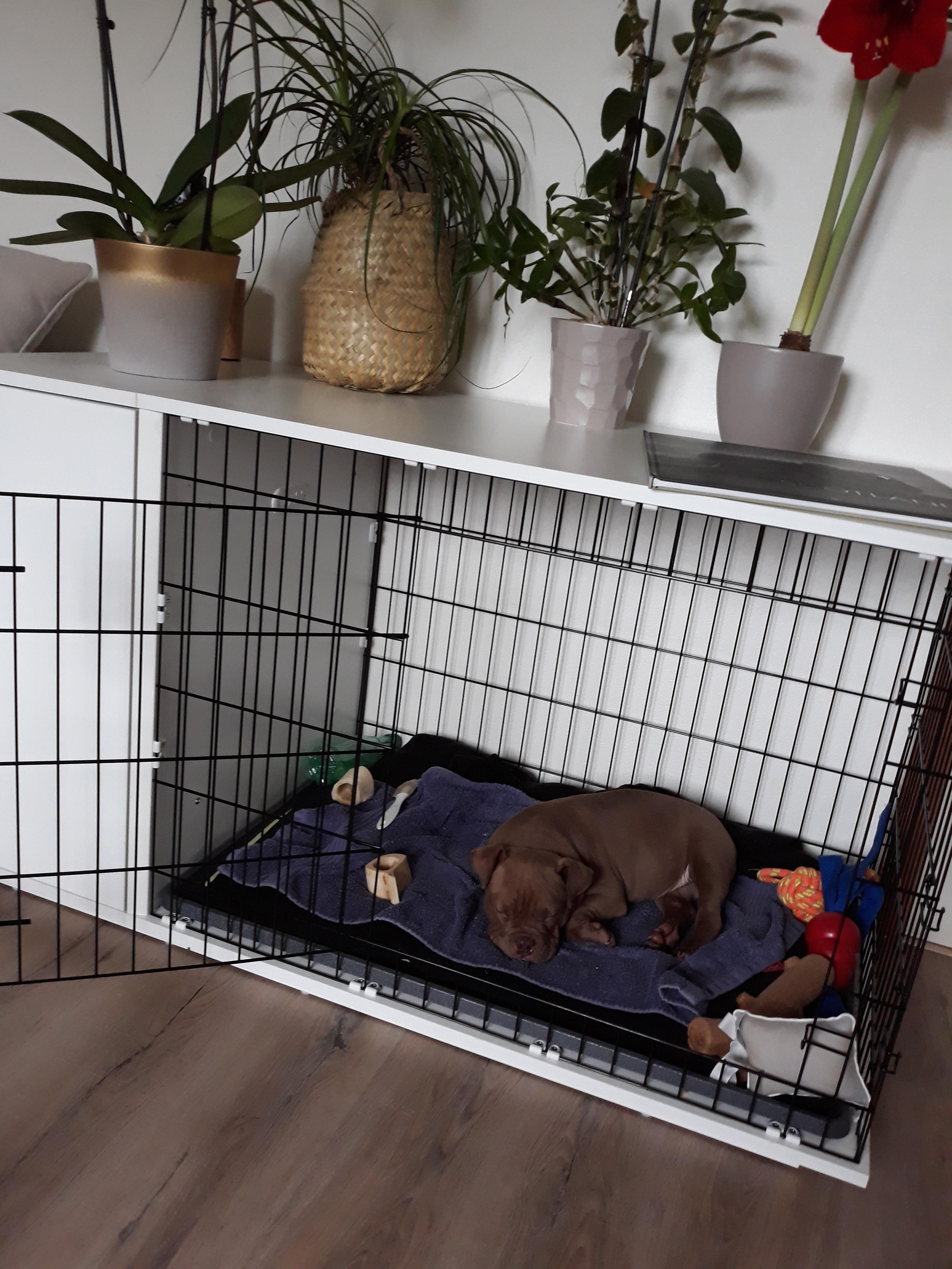 Fido Studio 24 Dog Crate Walnut