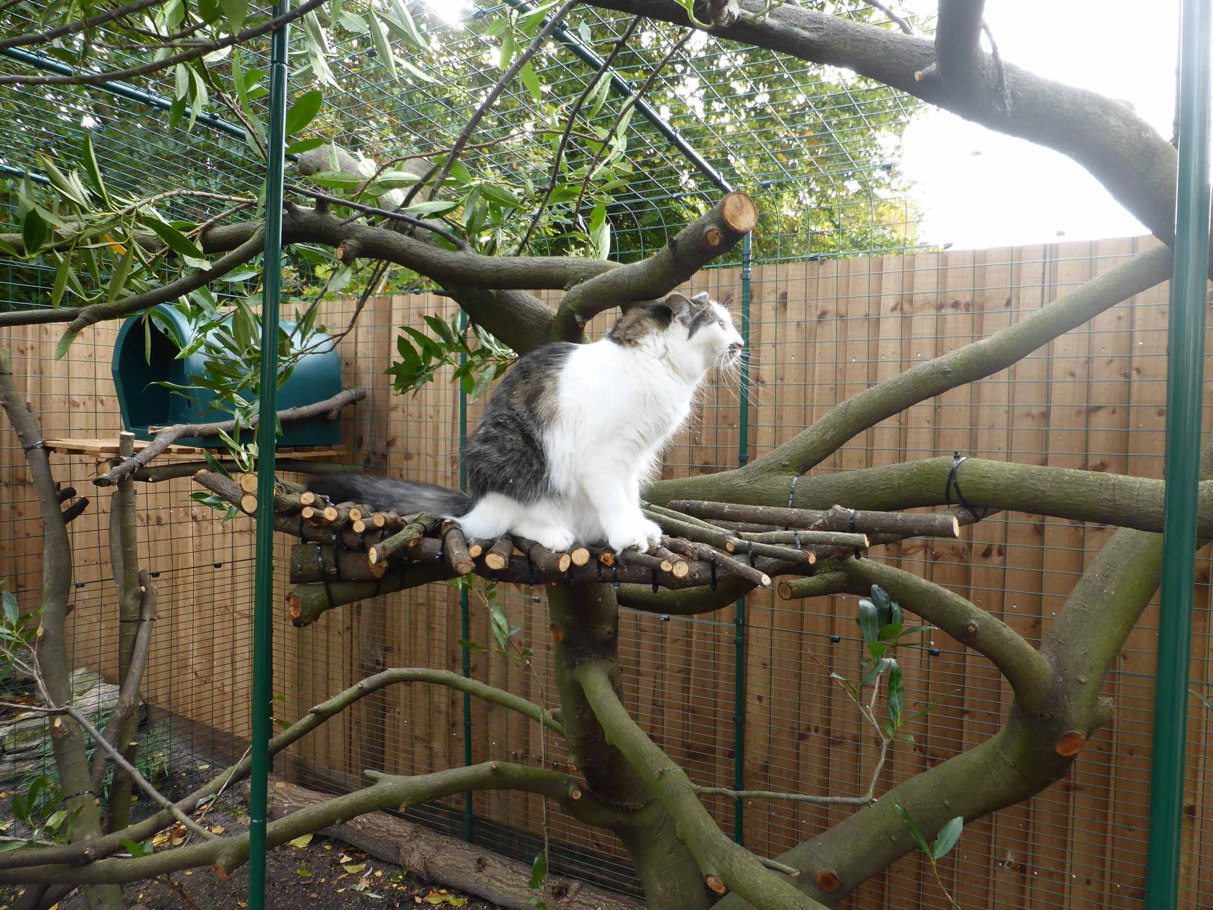 Cat Run Built Around Trimmed Bush As A Natural Climbing Frame