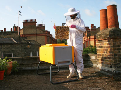 Photo of a Beekeeper on his roof holding a comb of Bees